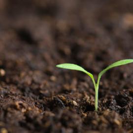 soil-plant-life